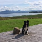 Dog enjoying view at Stac Polly Cottage