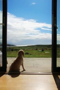 Poodle enjoying view from Locholly Lodge
